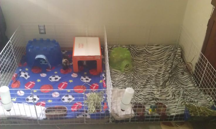 Do it yourself Guinea Pig cage. Cost for the cube shelving (two bundles) $45 dollars (walmart.com), mats under the blankets $10 (Manards),blankets $6 for two(big lots). A crazy HUGE cage for three guinea pigs half the price of one at the pet store and a LOT bigger! Plus all you do is vacuum up the poopies everyday and wash the bedding every few days. Hose off and air dry the mats once a week. The piggies LOVE it! Plus when I give them fresh veggies they don't get shavings in their food!