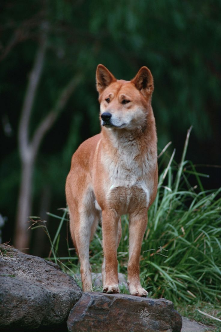 5 Images de Loups