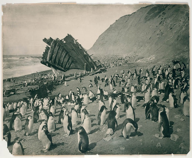Wreck of the 'Gratitude', Macquarie Island - Photo by Frank Hurley - 1911 - Explore the World with Travel Nerd Nici, one Country at a Time. http://TravelNerdNici.com