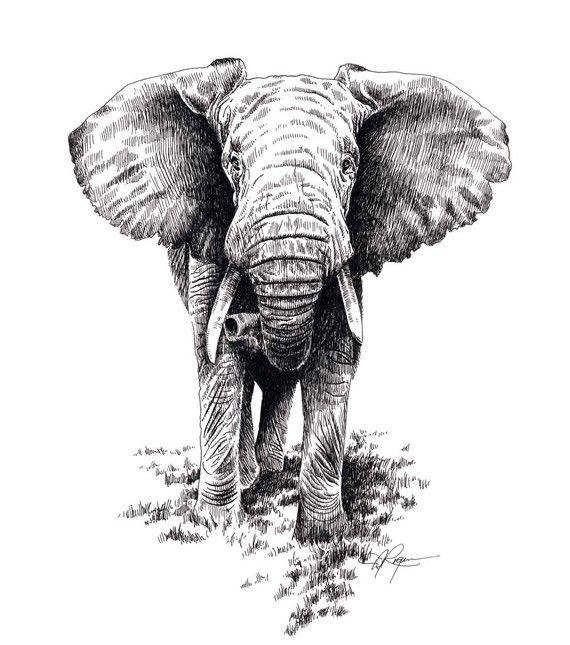 AFRICAN ELEPHANT Wildlife Art Print Signed by Artist DJ Rogers
