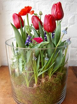 """. """"Love Grows"""" Bulb Garden In a clear container, create a lush, mossy garden of spring bulbs in bright jewel tones.   Created by: Alethea Harampolis & Jill Pilotte, Studio Choo  Click here to download the directions in PDF format."""