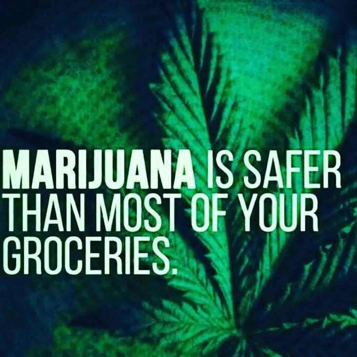 "492 Likes, 24 Comments - Anna • 💚 • Compassion • Unity (@sproutinglove) on Instagram: ""Happy 420 💚🌿 #maryjane #marijuanaisnature #healtheplanet #naturalmedicine"""