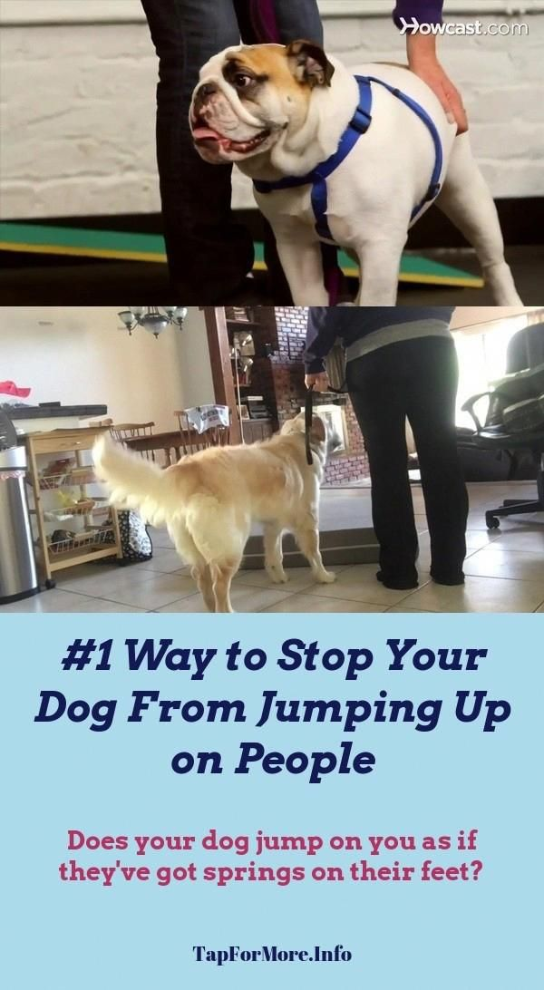 Stop Dog Jumping And Dog Commands Hand Signals Check The Pic For