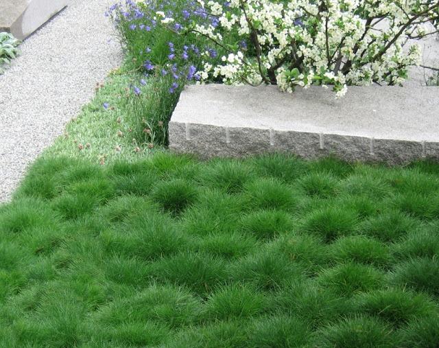 Festuca gautieri (Zwenkgras), mooi in eigentijdse tuin; gecombineerd met grof gezaagde stukken natuursteen en pad van lichtgrijs split