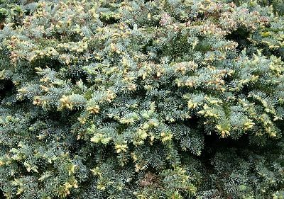 The Best Evergreen Hedges For Texas Evergreen Texas And