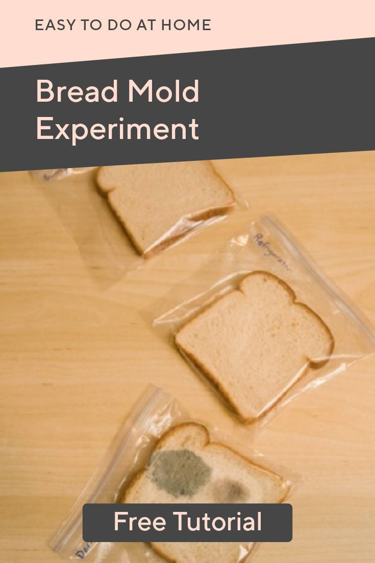 Bread Mold Experiment Science Activities Bread Mold Life Science