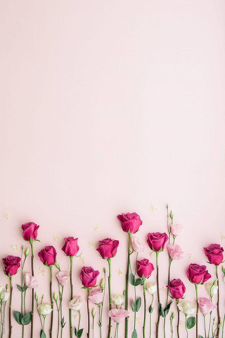 Rosa Rosen auf rosa Hintergrund von Ruth Black fü…