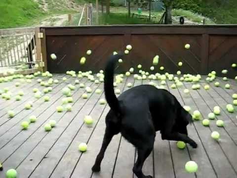 A dog's dream comes true.