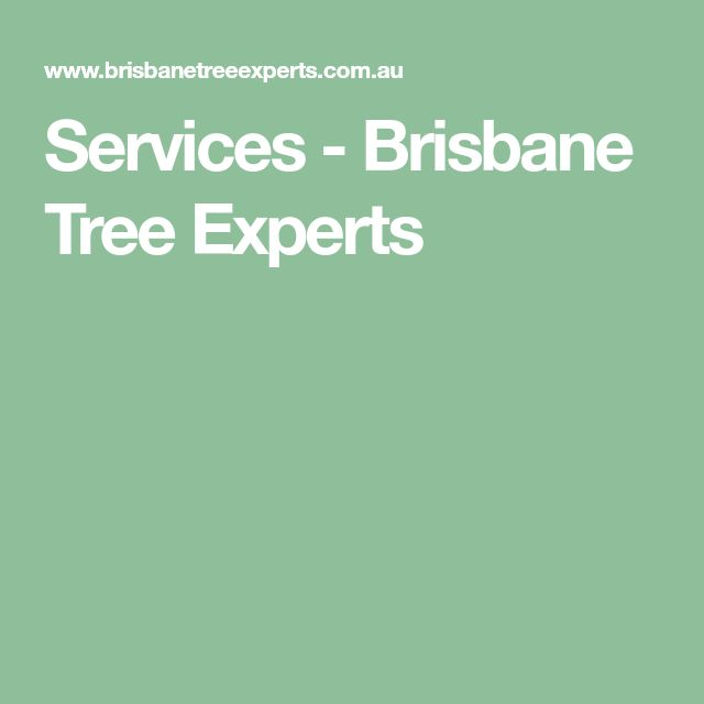 Services - Brisbane Tree Experts