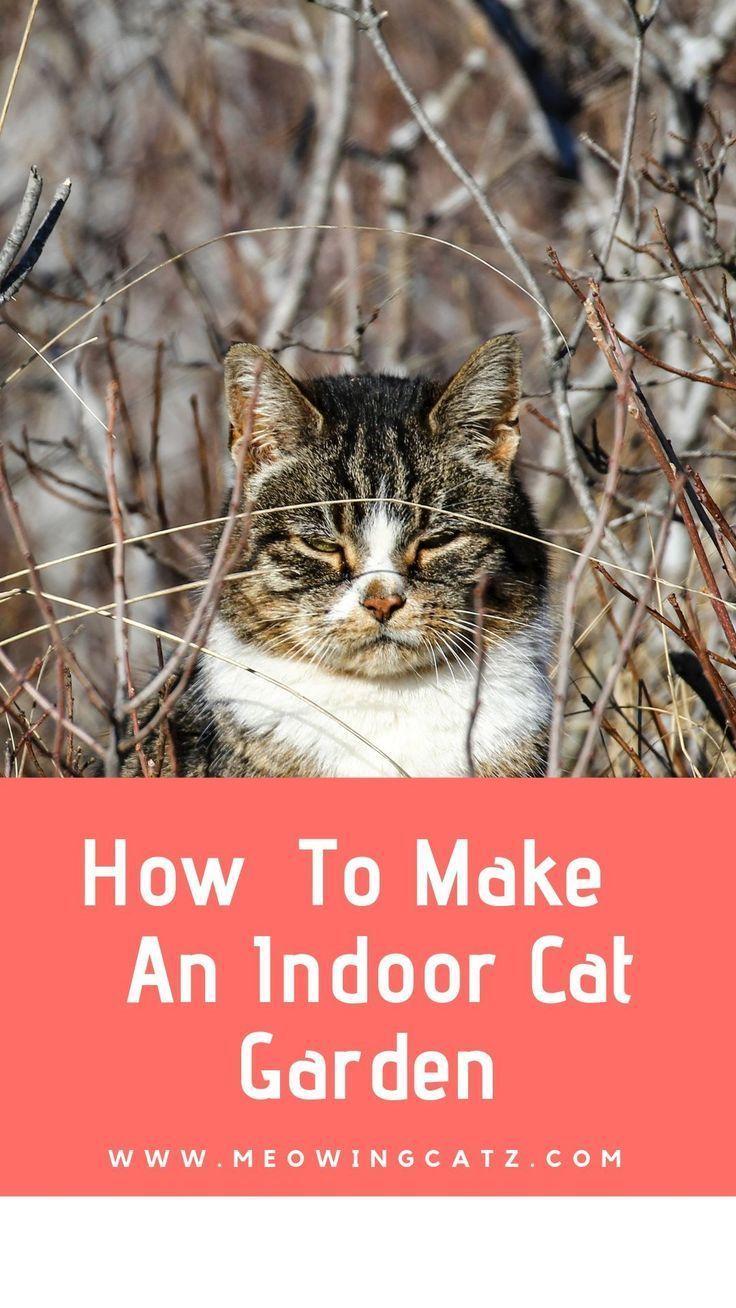 A Beginners Guide For Creating An Indoor Cat Garden In 2020