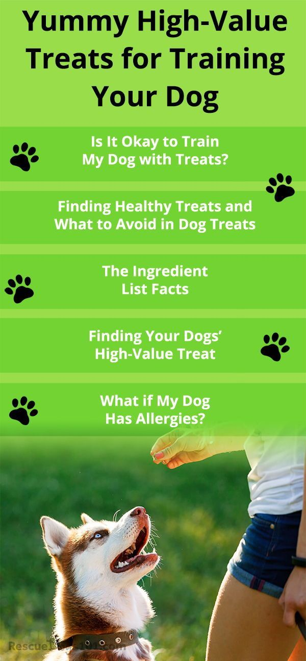 My Top 19 Recommended Dog Treats For Training List Training Your