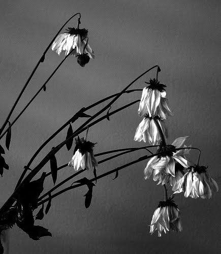 dead flowers - Google Search