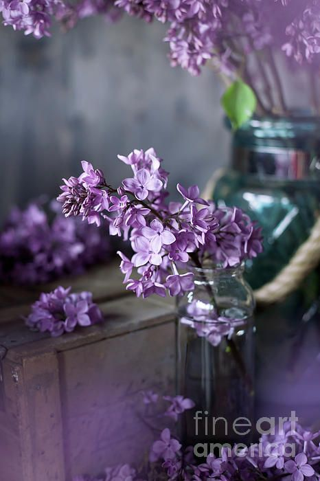 Lilac blossom in a country house setting, vintage styled photo, available as canvas print and royalty free image, by Svetlana Imagineisle.  Lilac blossom, vintage tint and country style photo, soft focus #CanvasPrint #ArtForHome #RoyaltyFreeImage #ArtForWalls #HomeDecor #Lilac #LilacBlossom #FlowerPhotography #ArtForSale