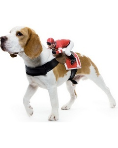 The perfect jockey costume from Wonder Costumes for our four-legged friends.