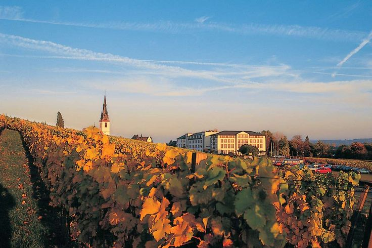 Schloss Reinhartshausen - a five star hotel with its own vineyard.  Gorgeous location in the heart of the German wine country.