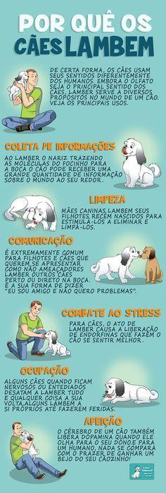 Por quê os cães lambem - http://www.comotreinarumcao.com.br/porque-o-cachorro-lambe-o-dono