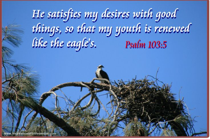 """✝✡Psalms 103:5 KJV✡✝ #Shalom Everyone!! ( http://kristiann1.com/2015/05/26/ps1035/ ) """"Who satisfieth thy mouth with good things; so that thy youth is renewed like the Eagle's."""" ✝✡Hallelujah & Shalom!! Kristi Anne✡✝"""