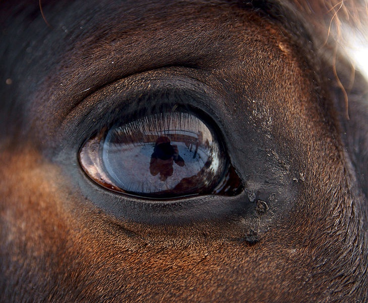 In the #horse #eye, you are loved. | Horses, Horse anatomy ...