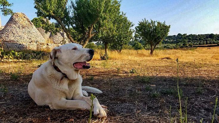 Nel passato di Raz Degan, il dolore per la morte del cane Max Il cancro lo ha ucciso a 8 anni