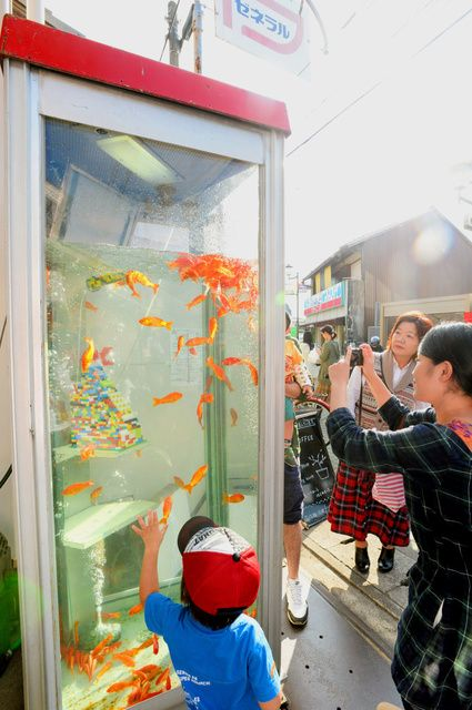 Guppies in a telephone booth - art installation, Japan