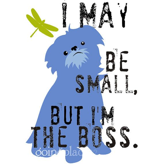 A lot of dogs seem to have this attitude                                                                                                           Mmhmm this is the Brussels Griffon motto.  You can't mess with the BGs baby! lol