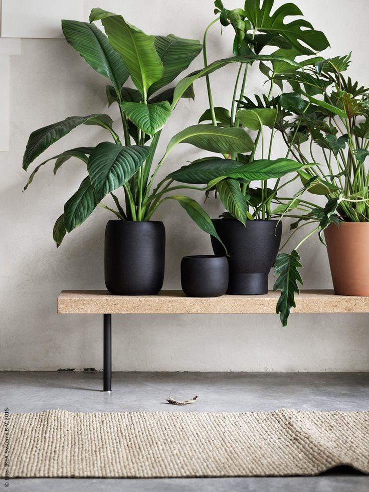 Keramik i naturliga färger och organiska former gör det lätt att skapa en egen zen-trädgård inomhus. SINNERLIG krukor.