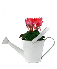 Watering can flowers!