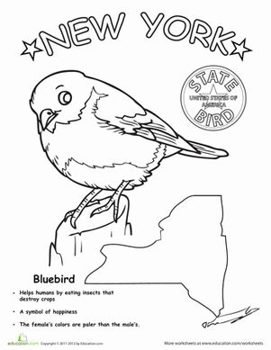 New york state bird life science worksheets and social for Fun activities for adults in nyc