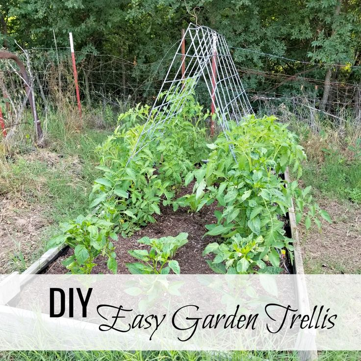 DIY Easy Garden Trellis, sturdy and super-easy! from Oak Hill Homestead