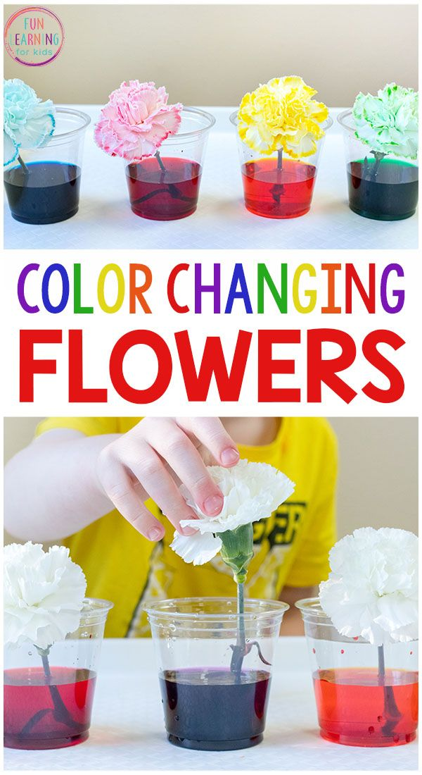 I just love this color changing flowers science experiment! It's a fun spring science activity for kids in preschool and elementary. Free printable recording sheets too!