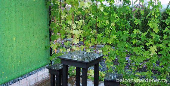 1000 images about wind break ideas on pinterest yard for Garden windbreak designs
