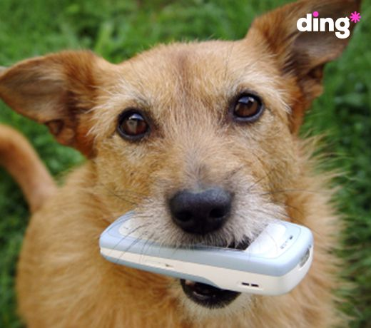 Feeling ruff? Why not call your friends for a catch-up? Send a top-up with ding* and you will be talking within minutes! https://www.ding.com/topup #dinganimals