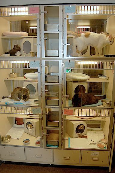 The Hypurrcat Spa at the Animal Endocrine Clinic, with 6 spacious and comfortable condos for boarding hyperthyroid cats during radioiodine treatment.
