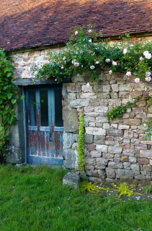 "catherinewillis:  "" New plantations next to S. door ( O.K. I know it needs repainting, but I quite like it like that )  Aquebia quinata and Lysimachia nummularia aurea, underneath climber R.New Dawn.  Left of the door : Chasselas de Fontainebleau..."