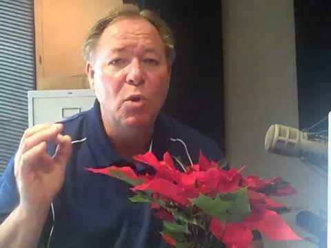 Caring For Holiday Plants In The Garden With Ron Wilson