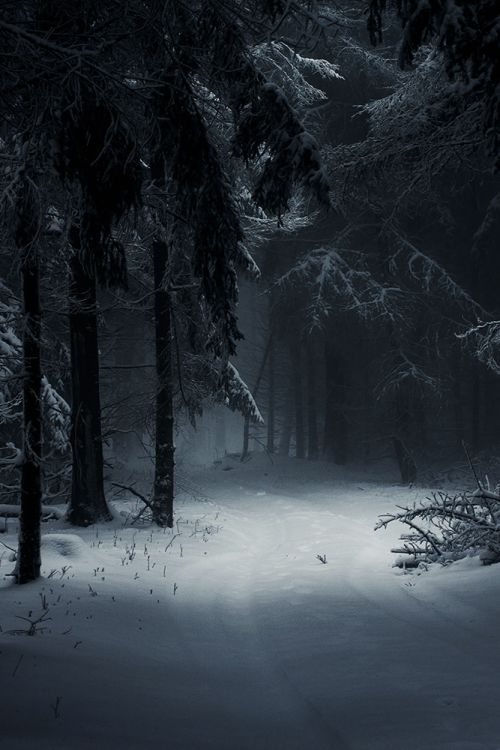 The woods are lovely, dark and deep... but I have promises to keep... and miles to go before I sleep... and miles to go before I sleep.
