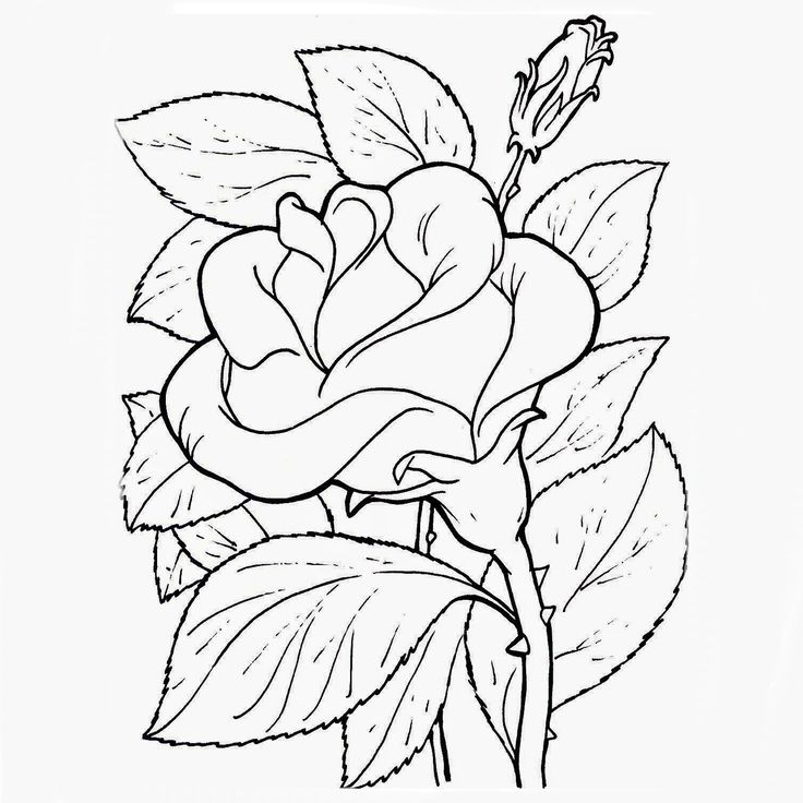 Más de 1000 ideas sobre Dibujos De Flores en Pinterest