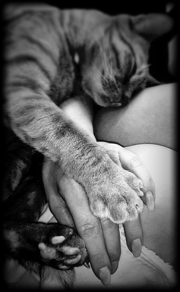 Pure love, Pumba🖤