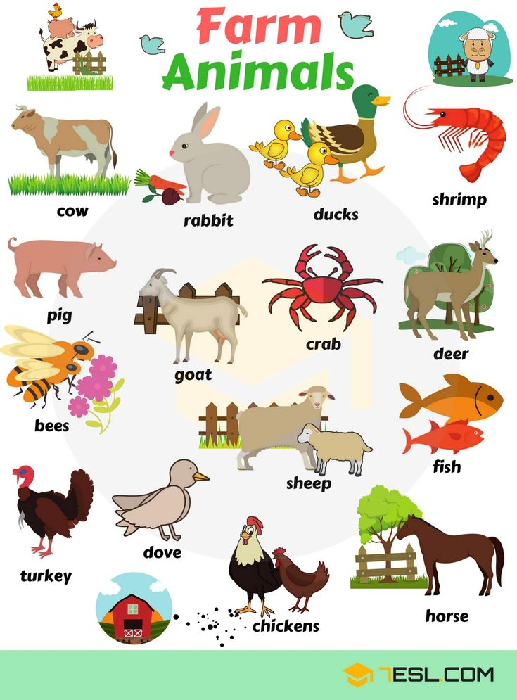 3.6Kshares Learn animals vocabulary/ animal names through pictures. Everybody lovesanimals,keeping them as pets, seeing them at the zoo or visiting …