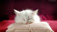 Как вывести запах мочи с дивана