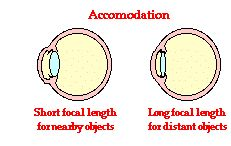 The Wonder of Accommodation: Image distances depend on object distances. Yet the retina of the eye where images are formed maintains a constant distance from the lens. The Physics Classroom discusses the action of the ciliary muscles to alter the focal length of the lens so as to fine-tune the refraction process so that images always form on the retina.