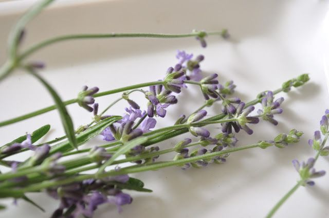 How to grow and dry lavender for use in sachets, sugar,baking and more