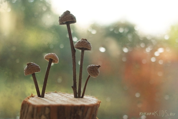 Make different mushrooms for your nature table using walnut and acorn shells and twigs. SO NEAT!!! via   ko-ko-ko Nature Crafts for Kids # 2