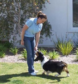 Everything Pets: How to Train a Basset Hound