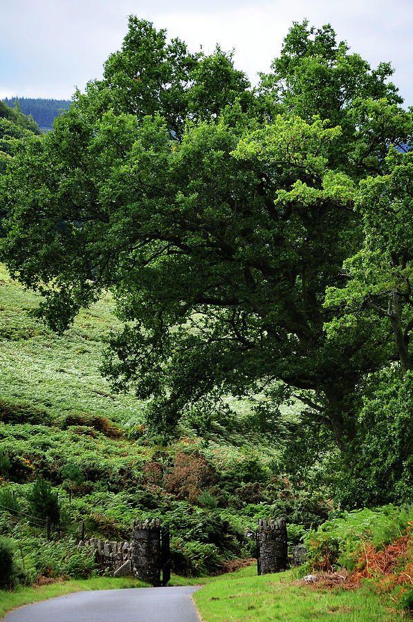 Gates Guardians. Wicklow Hills. Ireland by Jenny Rainbow