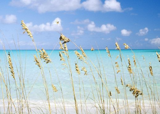 The beach: Beaches, Favorite Places, Vacation, Happy Place, Beautiful, Backyard, Travel, The Beach, Panama City Beach