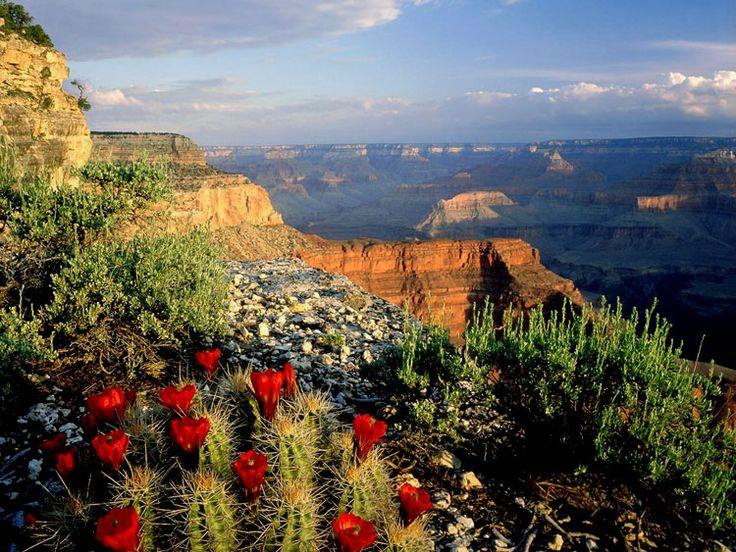 Национальный парк Гранд-Каньон в Аризоне Гранд Каньон, Аризона