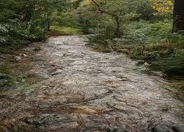 Image result for eerste river