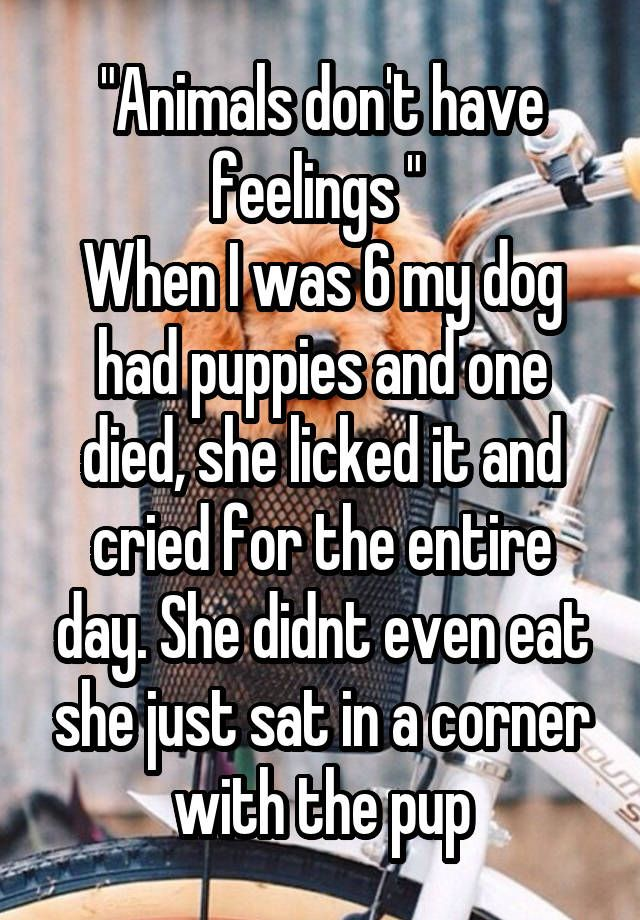 """""Animals don't have feelings ""  When I was 6 my dog had puppies and one died, she licked it and cried for the entire day. She didnt even eat she just sat in a corner with the pup"""