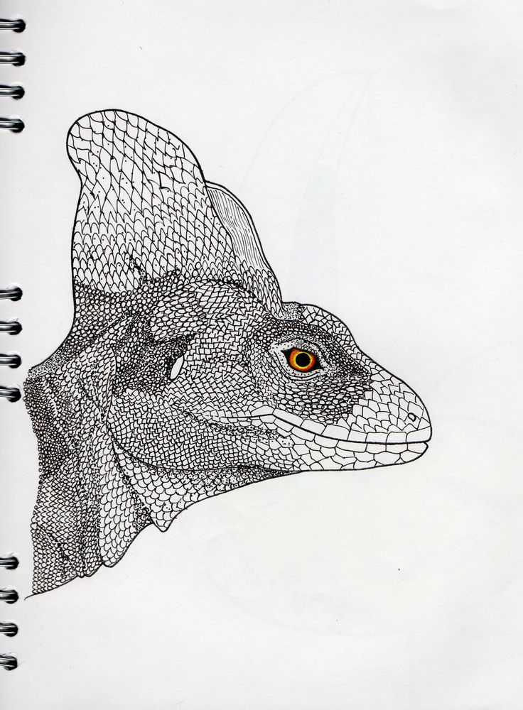 Green Basilisk Lizard - ilustration